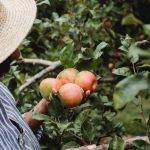 Roots and fruit: Why performance management doesn't work